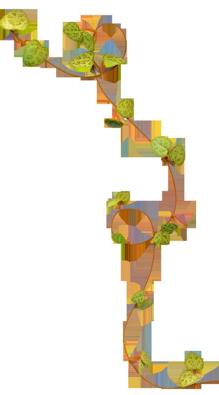 Tube Plantes