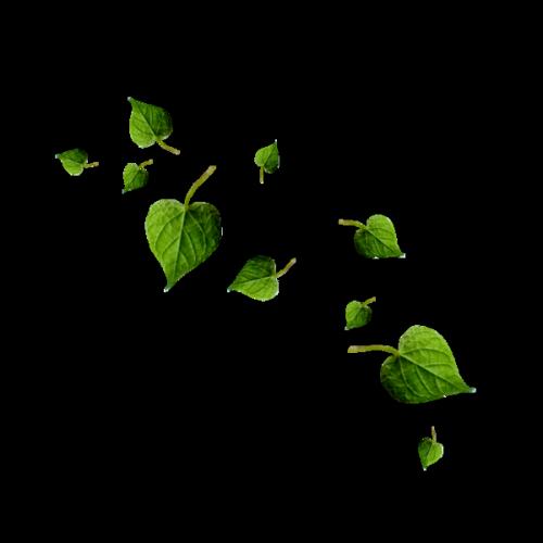 Tube Plantes.